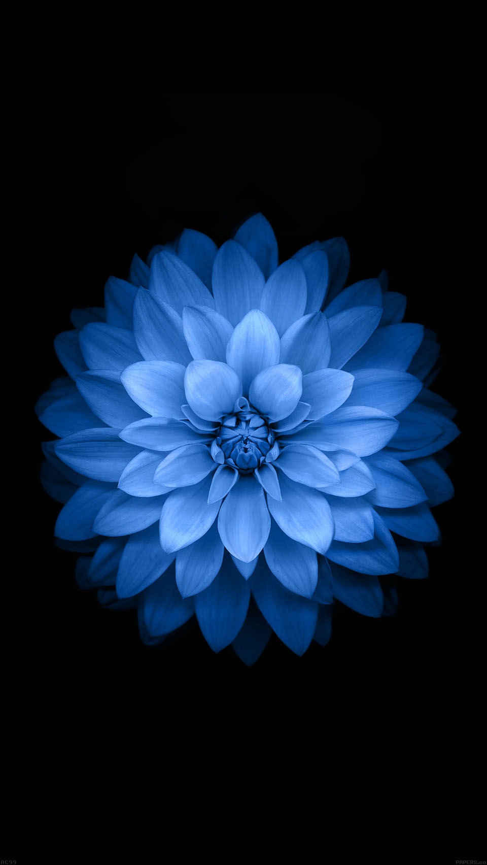 Free Download Blue Lotues Ios 8 Wallpaper Variant Iphone 6