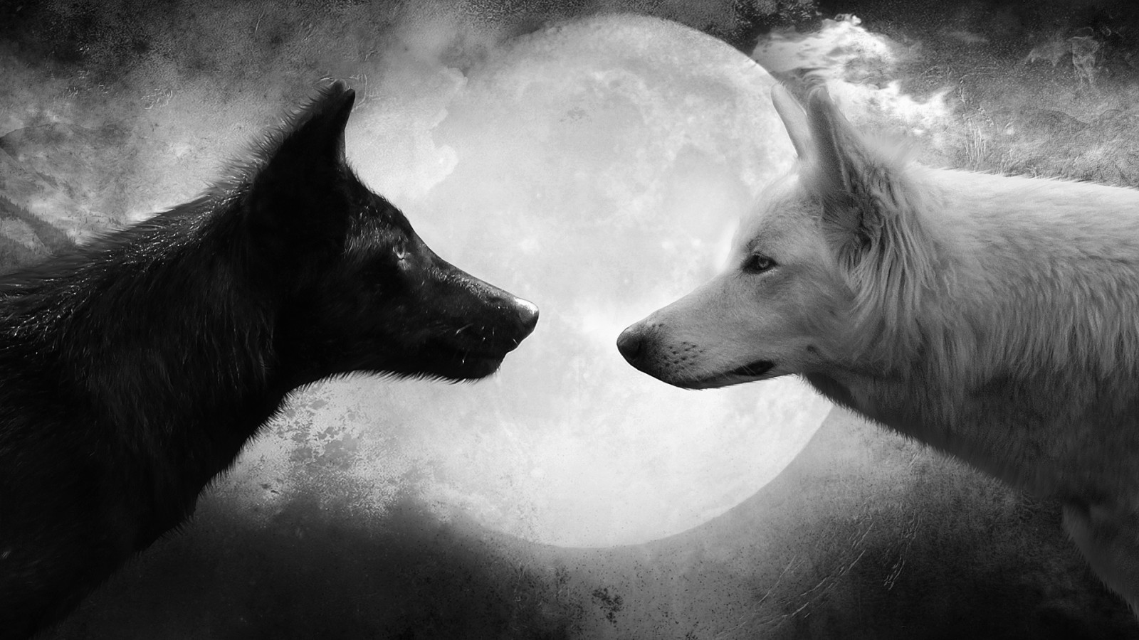 Black and White Wolf Pictures HD Wallpaper Black and White Wolf 1600x900