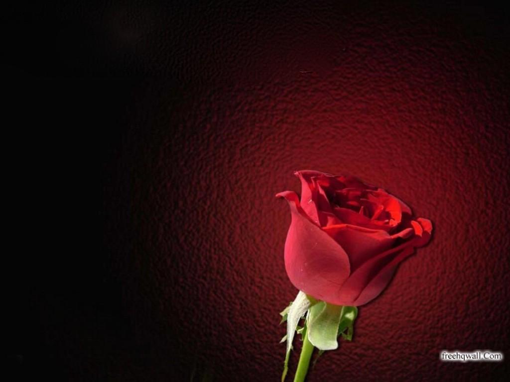 google images flowers wallpaper wallpapersafari