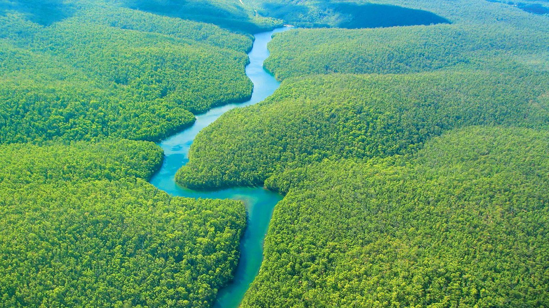 Free download Amazon Rainforest In Brazil HD Wallpaper ...