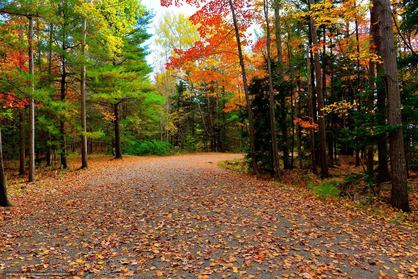 Download wallpaper Acadia National Park autumn road trees 1600x1068