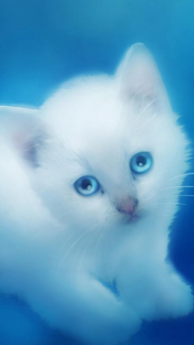 Cute White Kitten Wallpaper   iPhone Wallpapers 640x1136