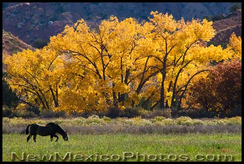 New Mexico PhotoJournal Horse at Ghost Ranch 500x337