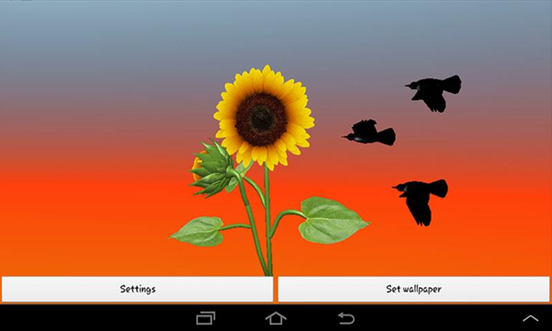 3D Sunflower Live Wallpaper   Android Apps on Google Play 800x480