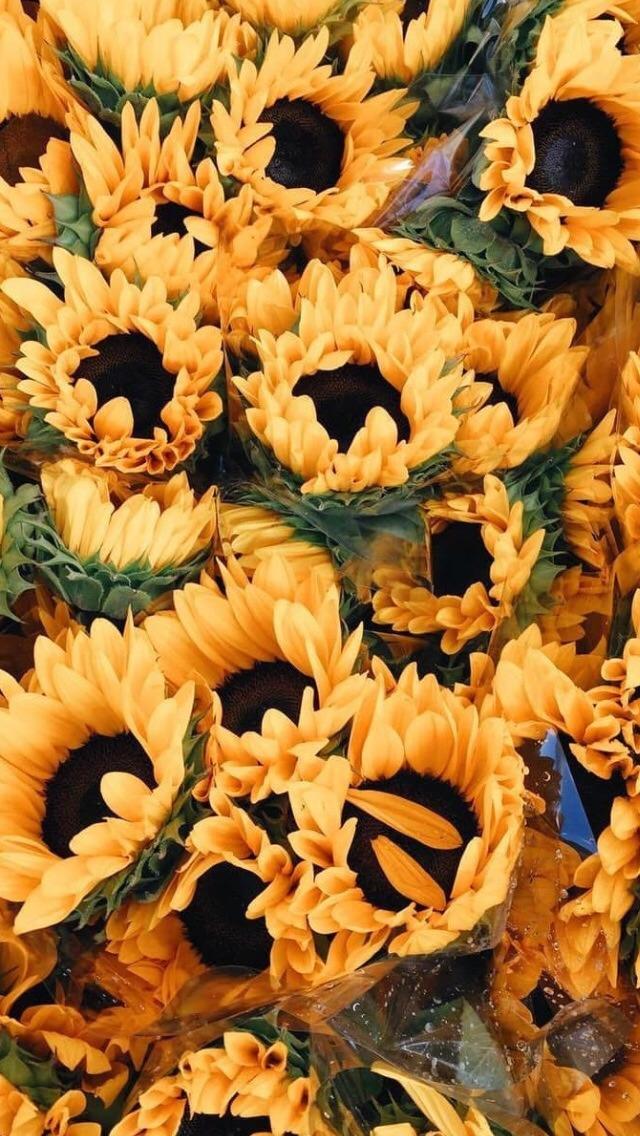 Ari Rachel images aesthetic flowers HD wallpaper and 640x1136