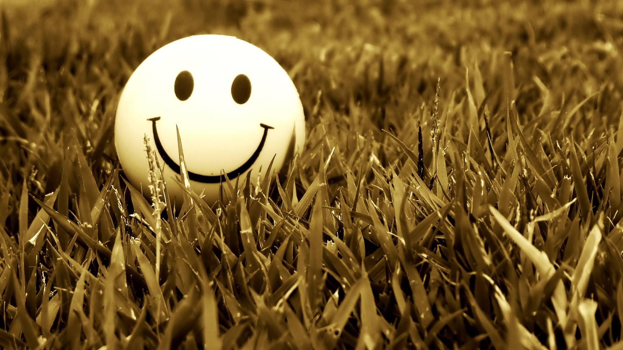 Grass Smiling 2048 1152 Wallpaper 2158365 2048x1152