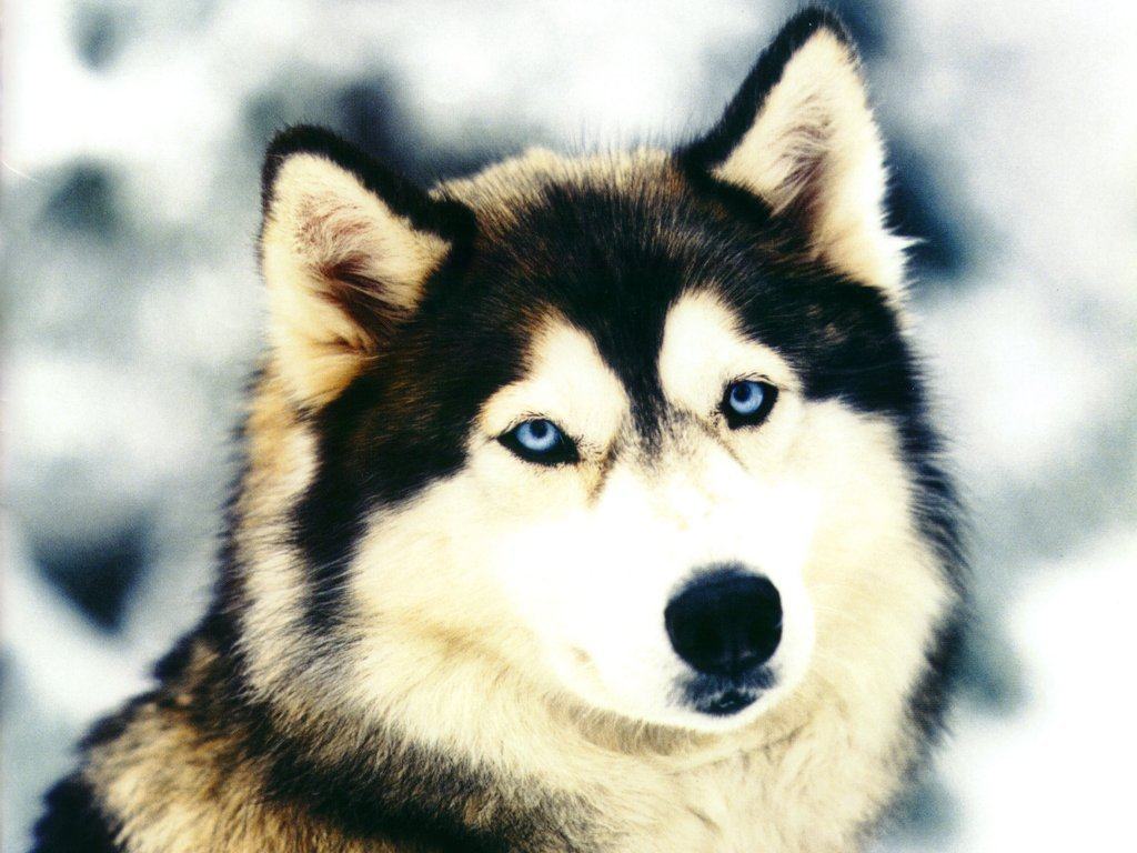 Dog Wallpapers Images and animals Dog pictures 648 1024x768