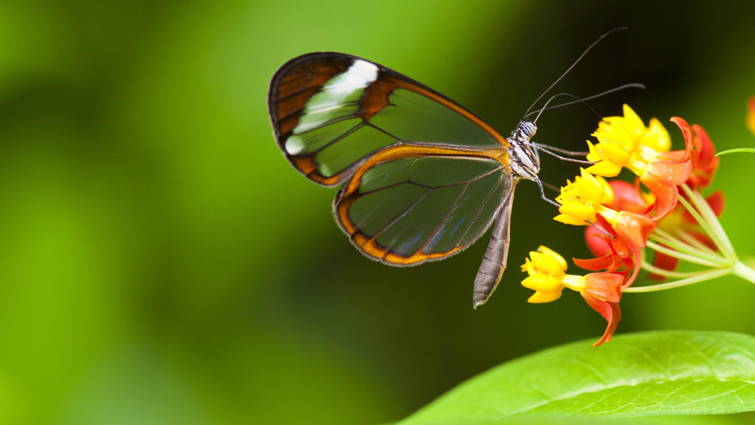 Wallpaper Butterfly 5k 4k wallpaper insects flowers green 2560x1440