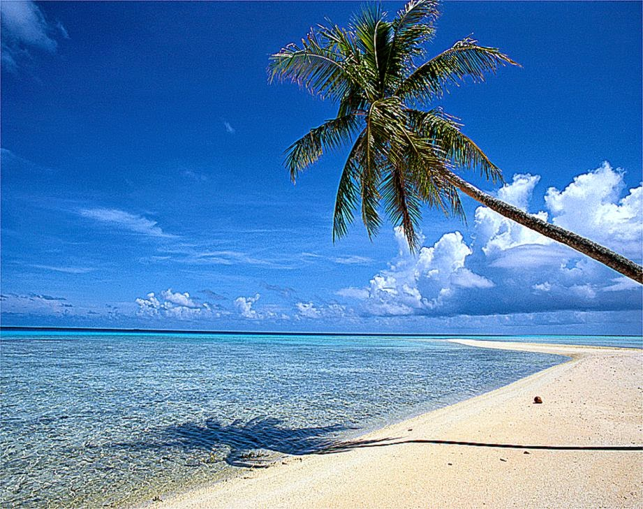 Beautiful Beach Backgrounds Palm Trees Beautiful Beach Backgrounds 921x729