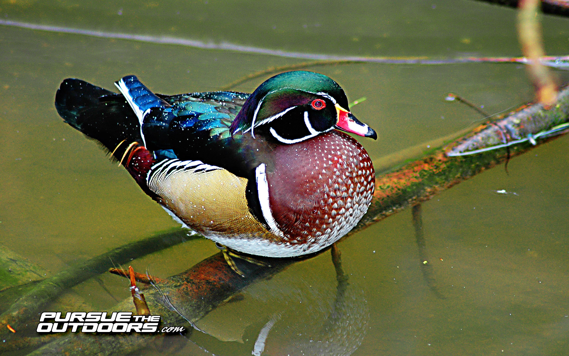 [45+] Duck Hunting Wallpapers For Desktop On WallpaperSafari