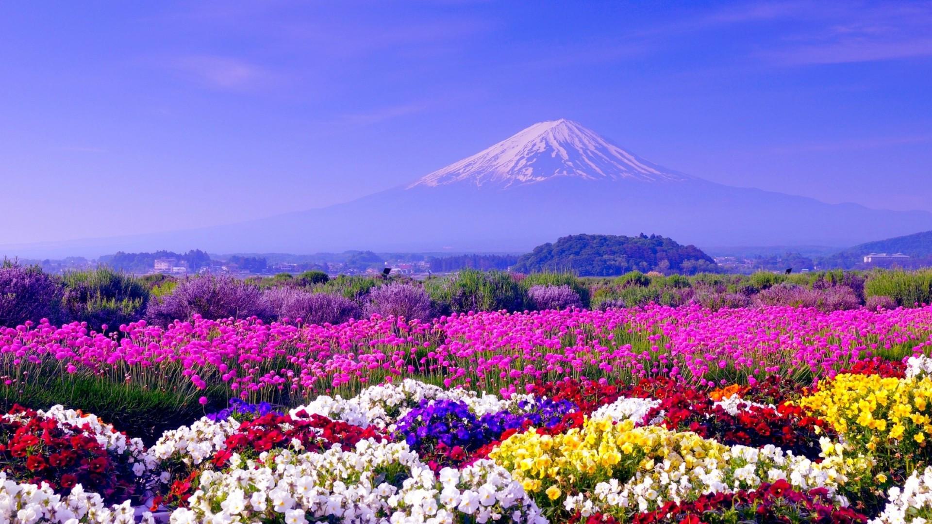 Spring in Japan Wallpapers HD download 1920x1080