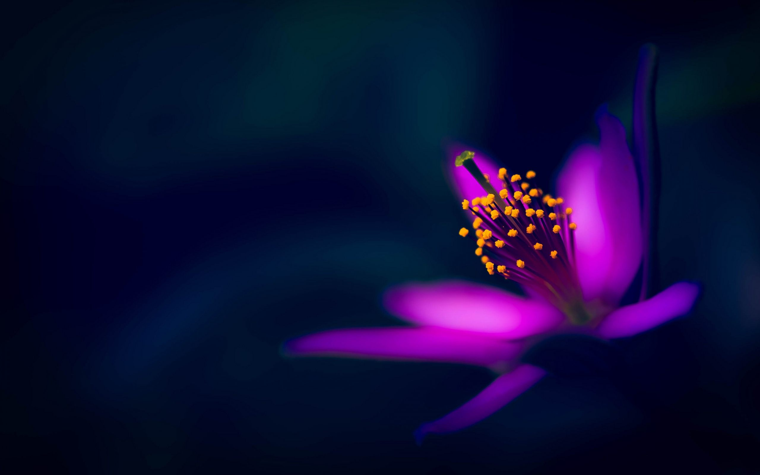 Wallpapers Purple Flower Images   Dark Flower Wallpaper Hd Hd 2560x1600