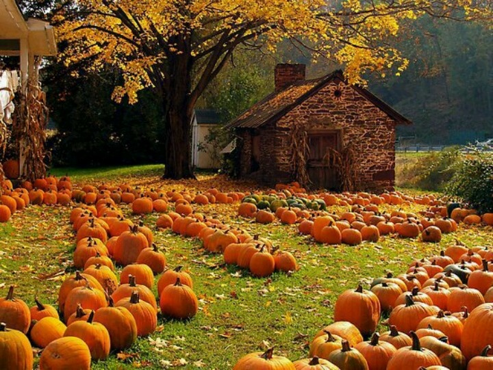 love a New England Autumn Autumn   My Favorite Season Pinterest 720x541