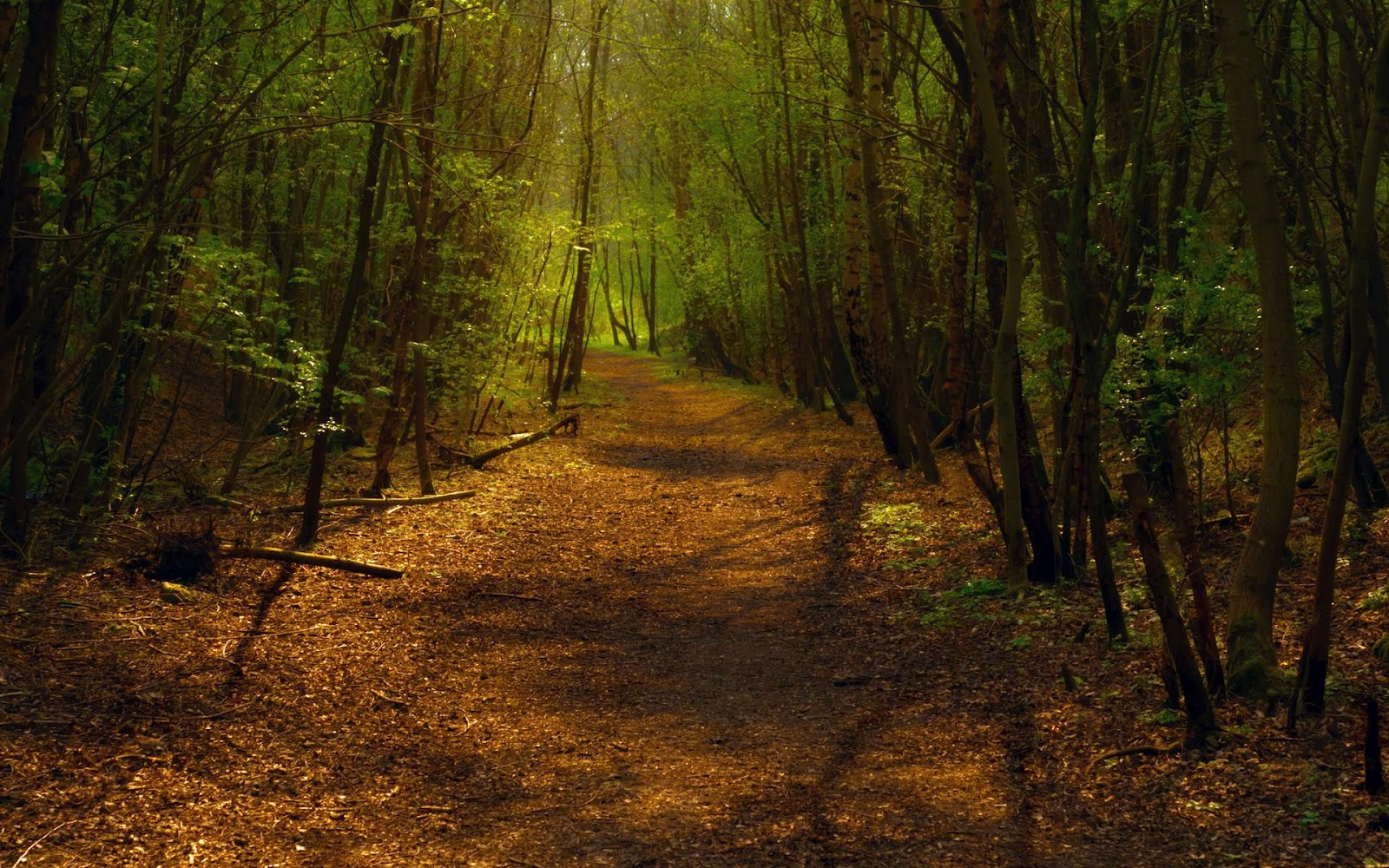 Forest Desktop Background  WallpaperSafari