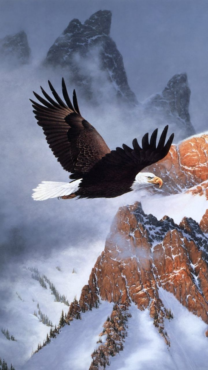 American Eagle Wallpapers   Top American Eagle Backgrounds 720x1280