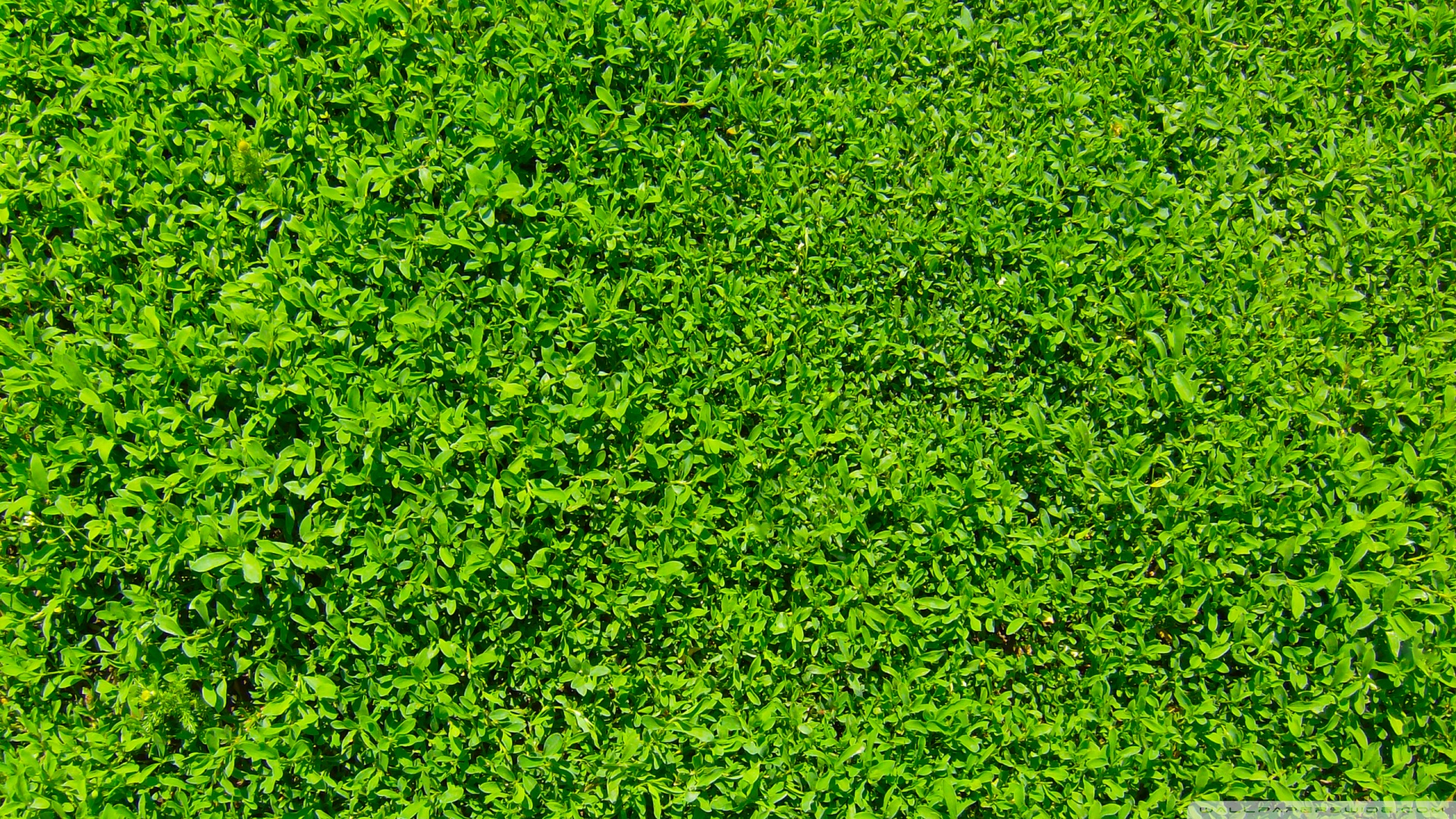 Free Download Grass Wallpaper Green Images 1920x1080 1920x1080