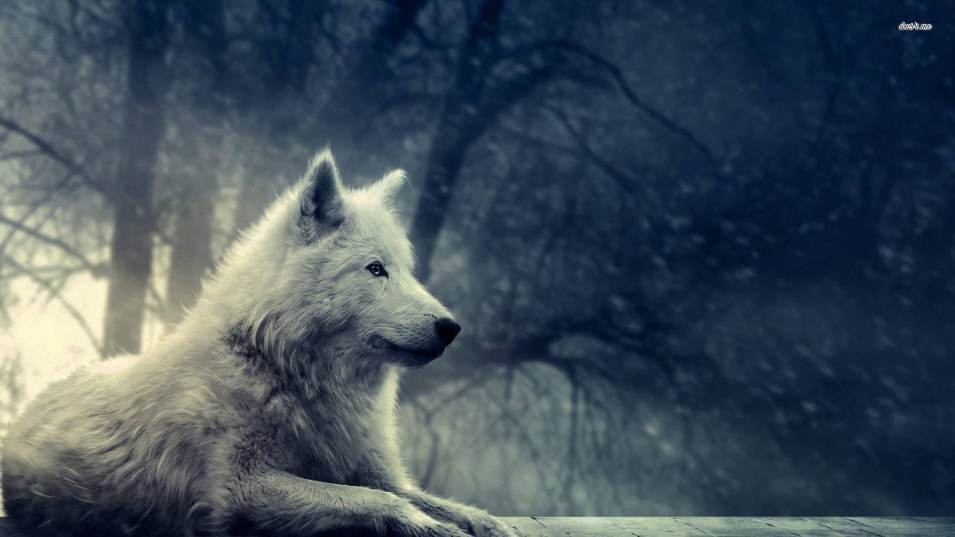 despre daci 9864 grey wolf 19201080 digital art wallpaper 1920x1080