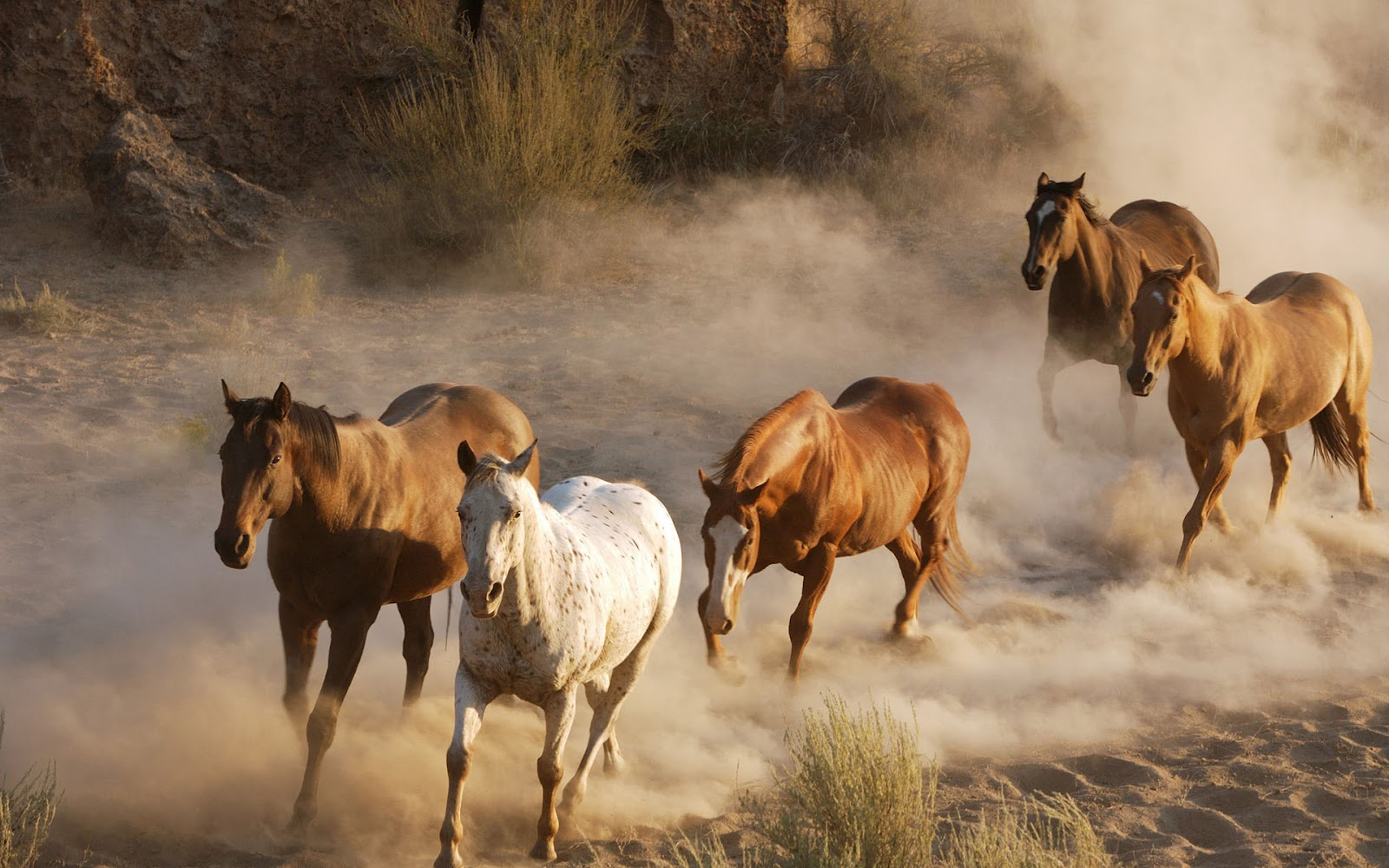 Free Download Hd Animal Wallpaper With Fast Running Horses Hd