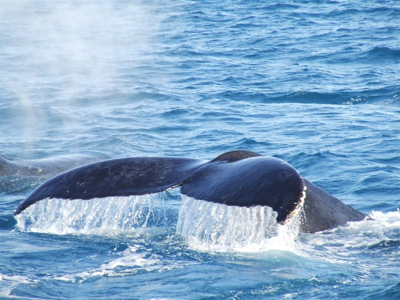 Zoomed In Whale Tail wallpaper   ForWallpapercom 808x606