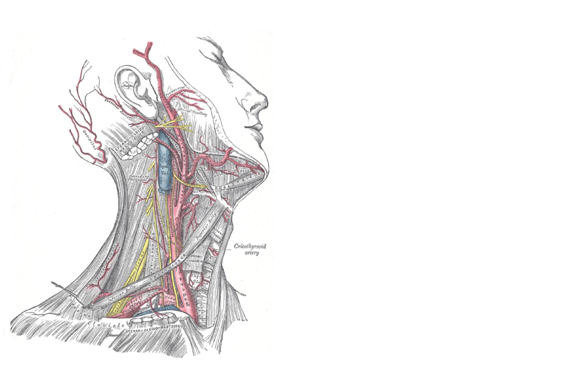 anatomy wallpaper background - photo #15