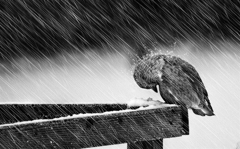 Birds Winter Animal Widescreen Wallpaper   1440x900 wallpaper 1440x900