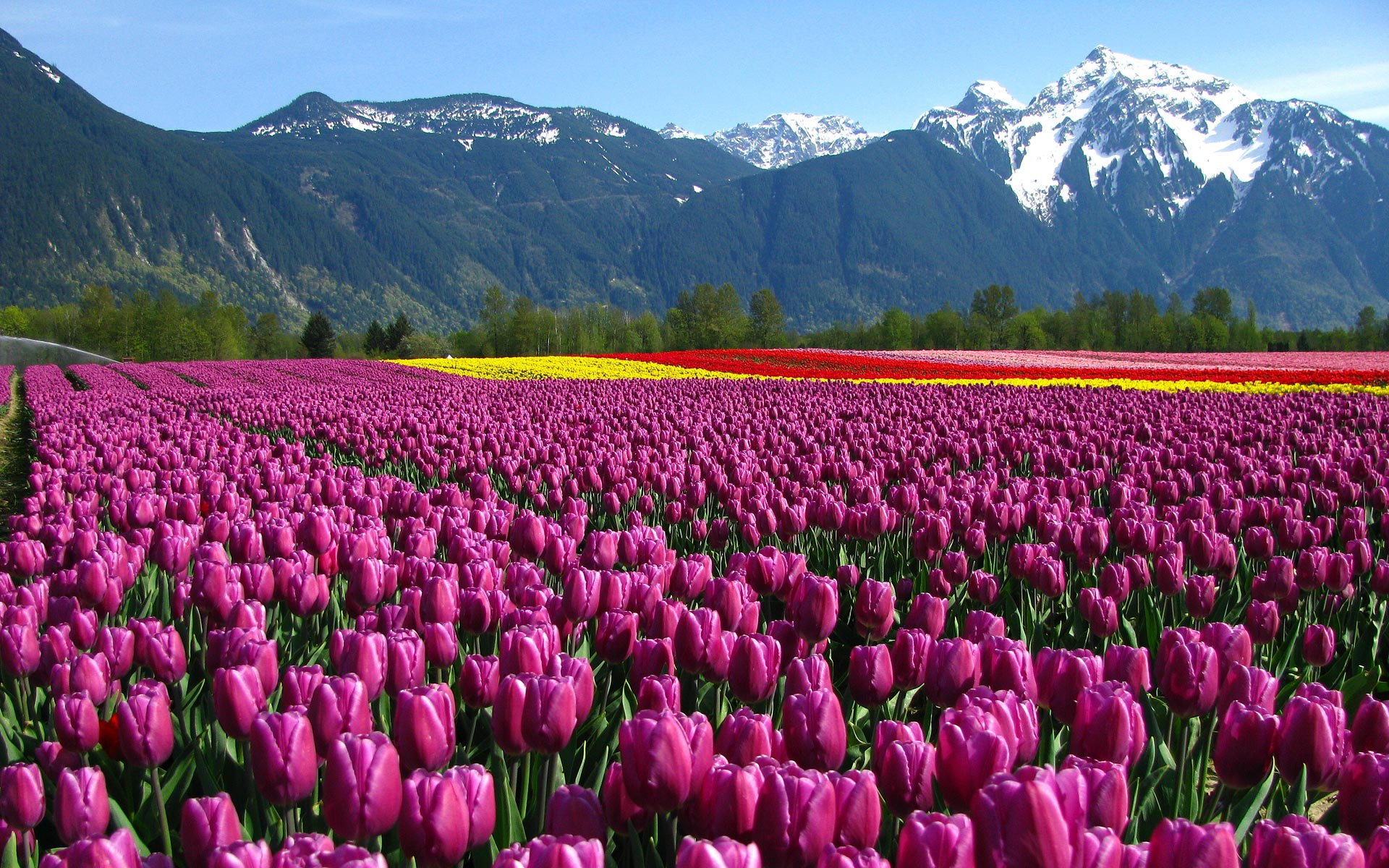 Beautiful Flower Field HD desktop wallpaper : High Definition ...