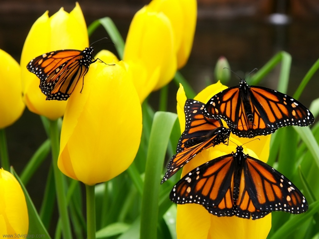 Butterflies and Flowers Mobile wallpapers 1024x768