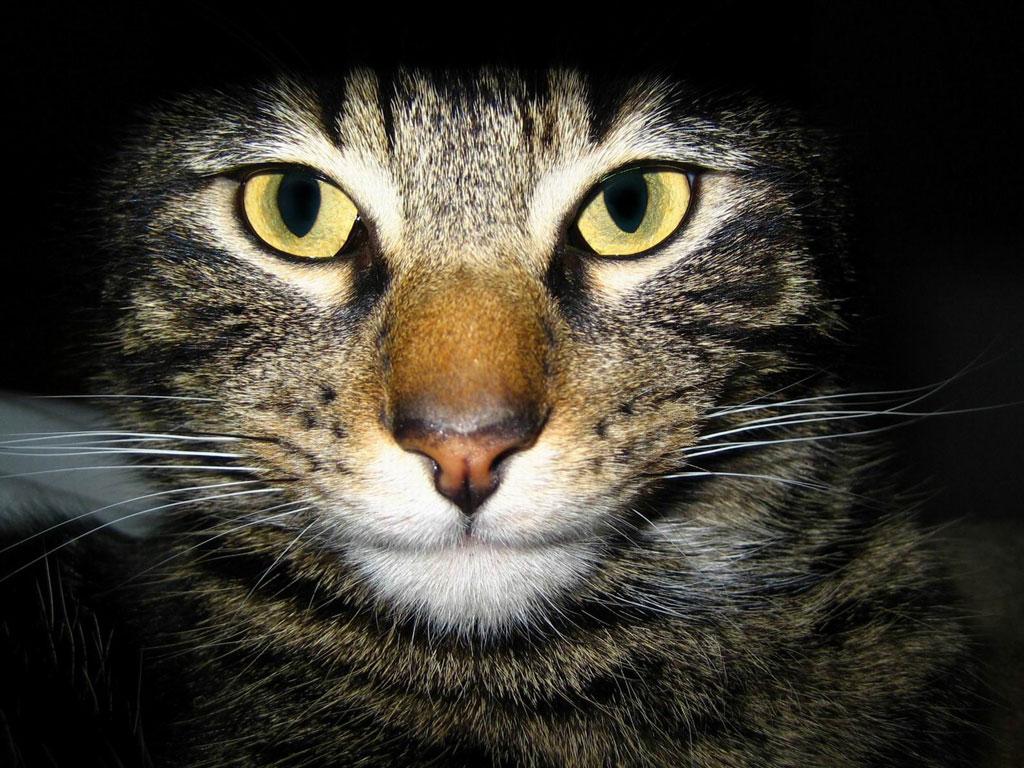 Animals Zoo Park Cats Wallpapers Desktop Cat Wallpaper 1024x768