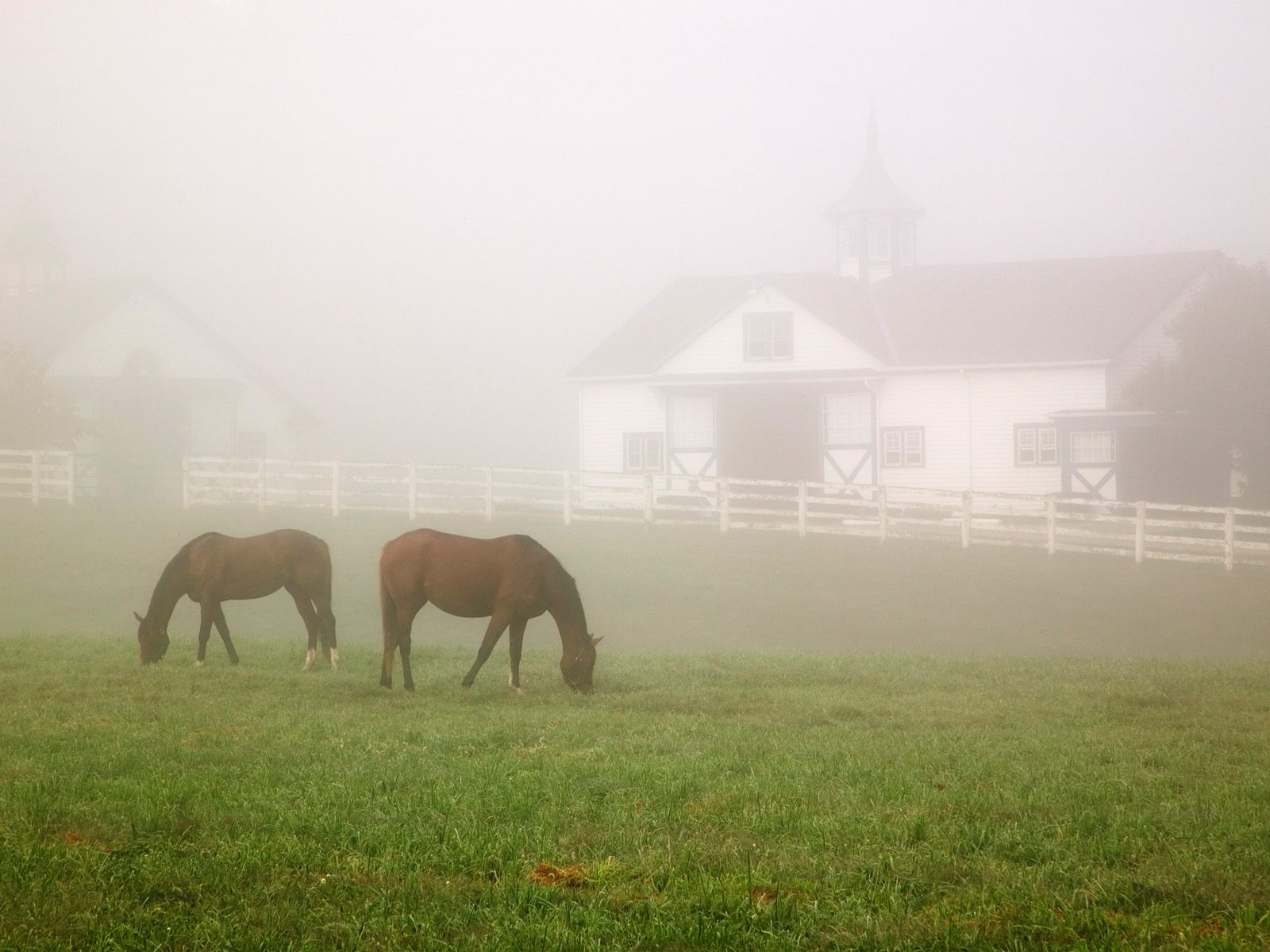 HQ Manchester Horse Farm Lexington Kentucky Wallpaper   HQ 1600x1200