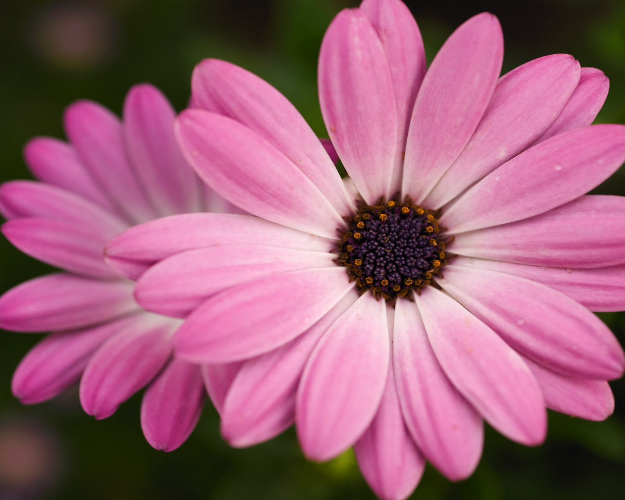 Widescreen Download for Mobile images designs Pink Flowers Wallpaper 1280x1024