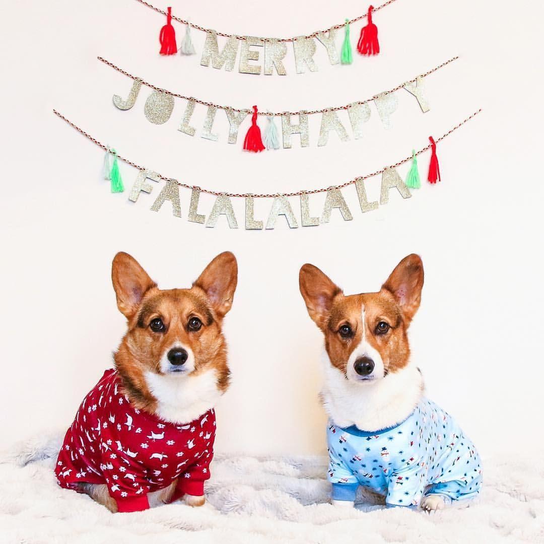 Christmas Corgi Wallpapers   Top Christmas Corgi Backgrounds 1080x1080