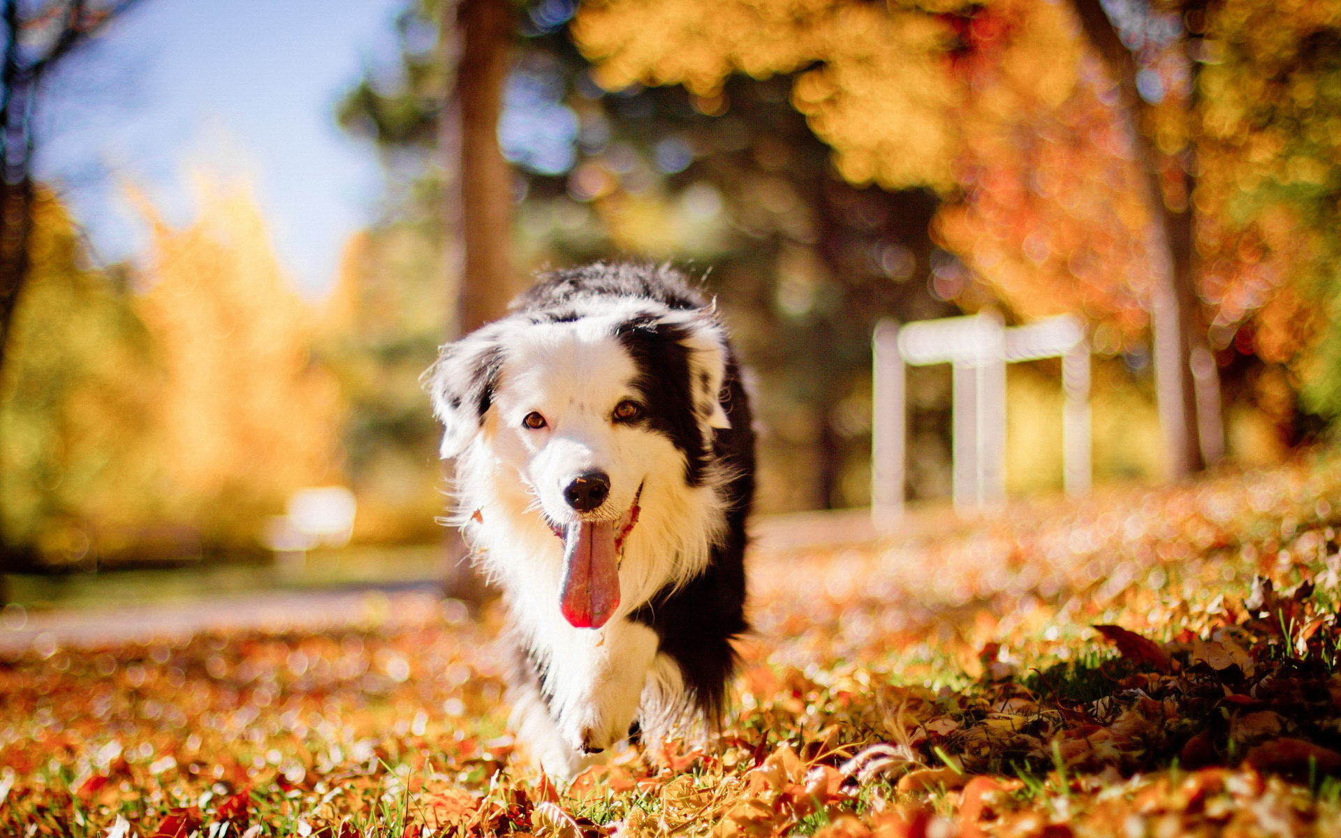Cute dog in romantic autumn wallpapers and images   wallpapers 1920x1200