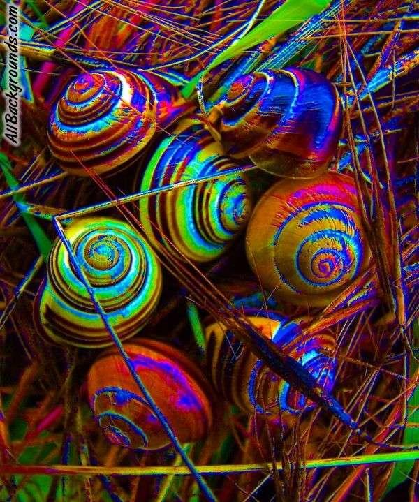 Trippy Snails Backgrounds   Twitter Myspace Backgrounds 600x719