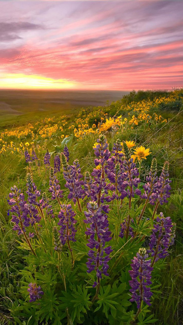 Download Spring Sunset iPhone 5 HD Wallpapers HD Wallpapers 640x1136