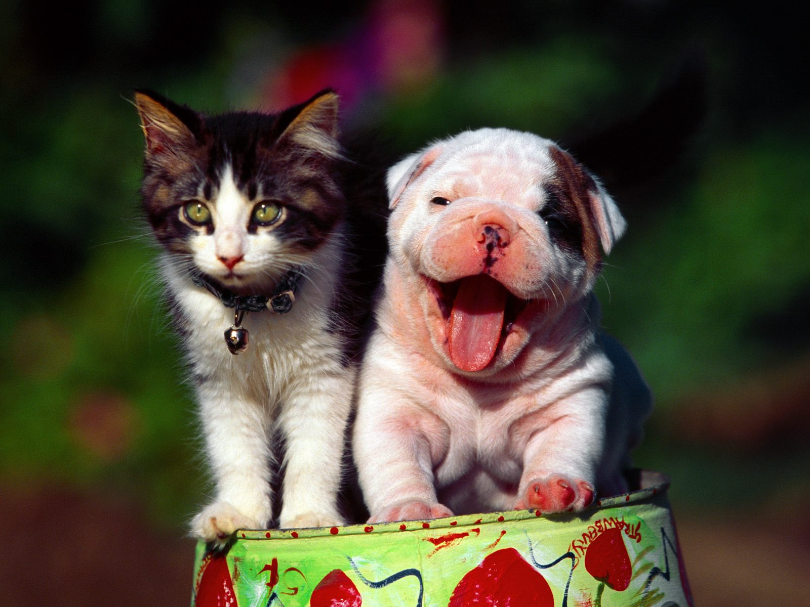 Dogs and Cats Wallpaper High Quality WallpapersWallpaper Desktop 1600x1200