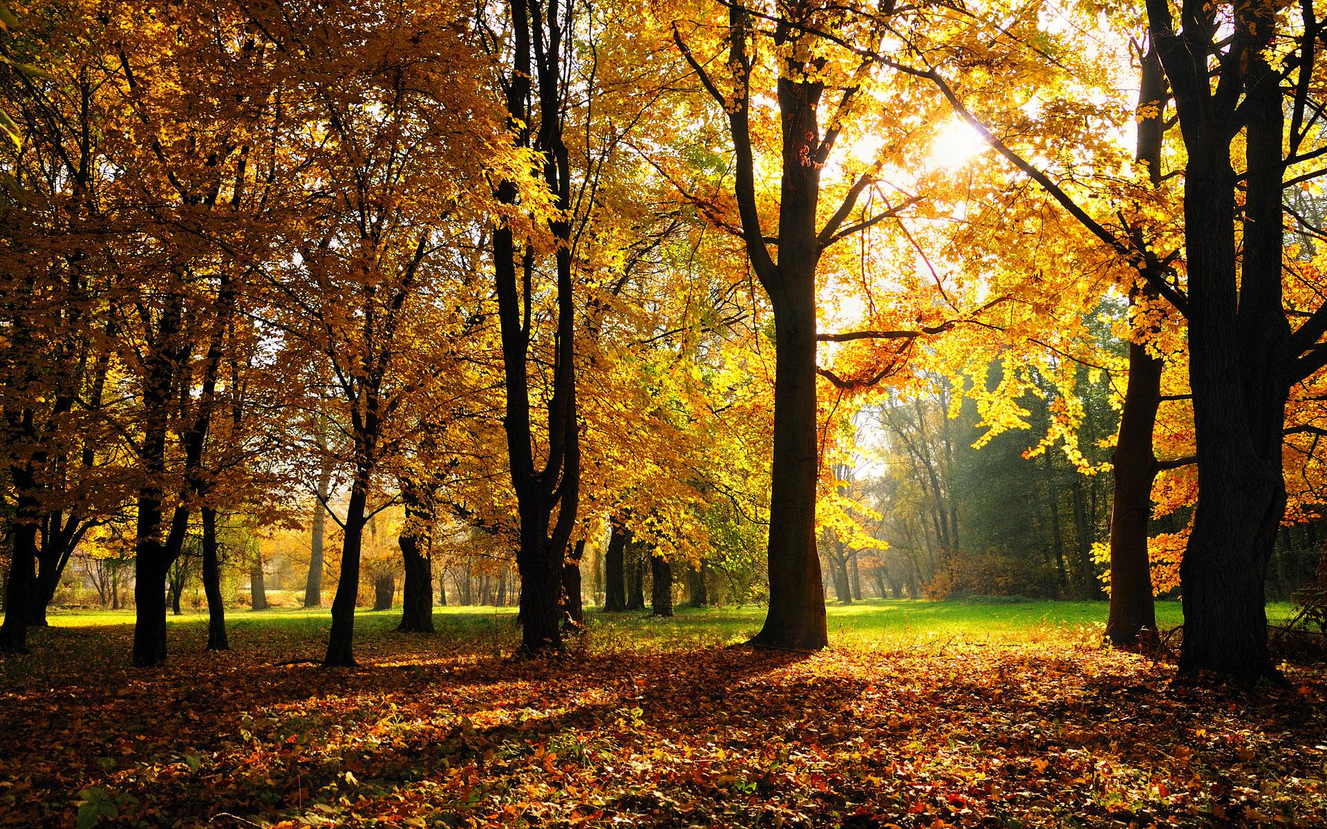 Autumn Season Wallpapers HD Wallpapers 1920x1200