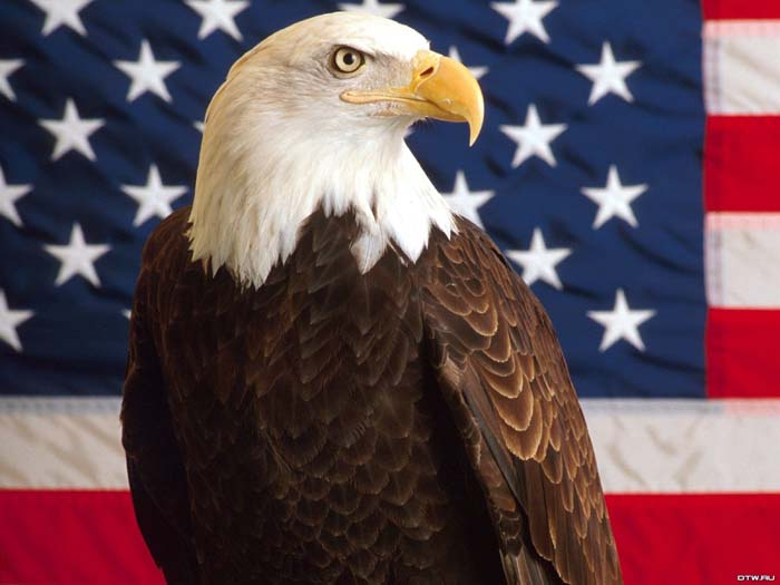 desktop pictures of bald eagles with american flag 700x525