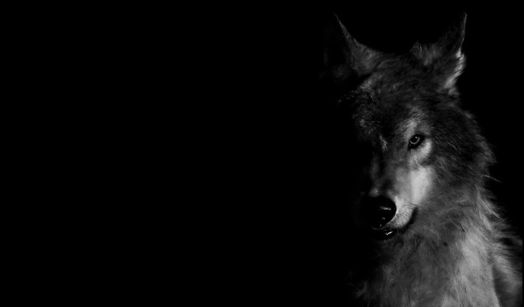 wolf wallpaper by unachicadelmonton 1024x600