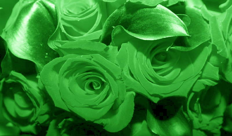 Flower Wallpaper Green Flower Wallpaper 800x469