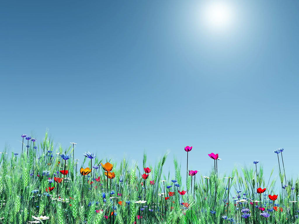 Simple Flower Garden Power Point Backgrounds Simple 1024x768