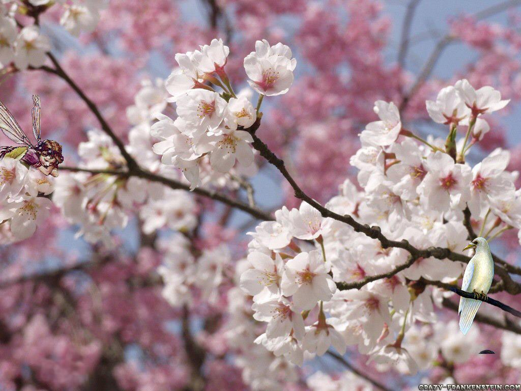 Spring Season Wallpaper For Desktop Background HD Desktop 1024x768