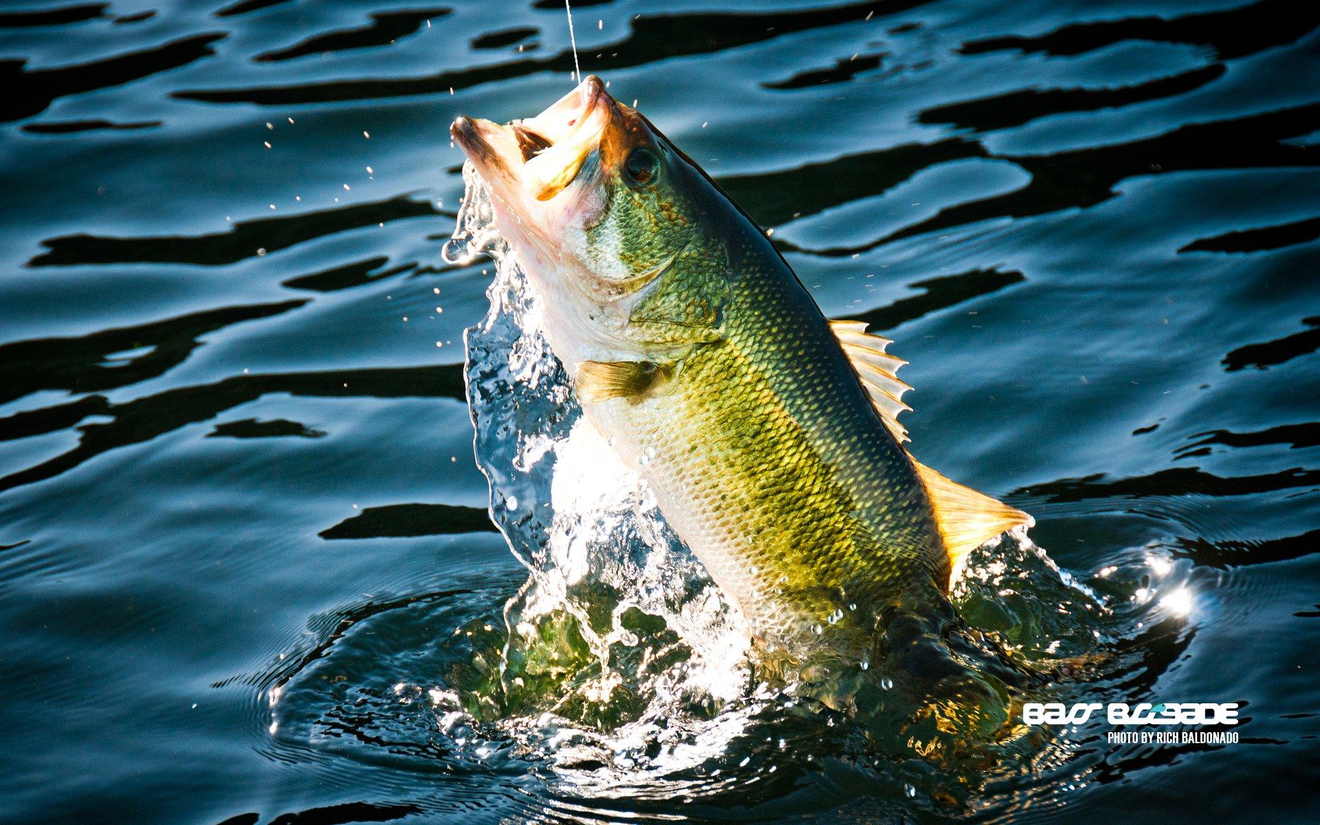 FISHING fish sport water fishes lake river bass wallpaper 1920x1200 1920x1200