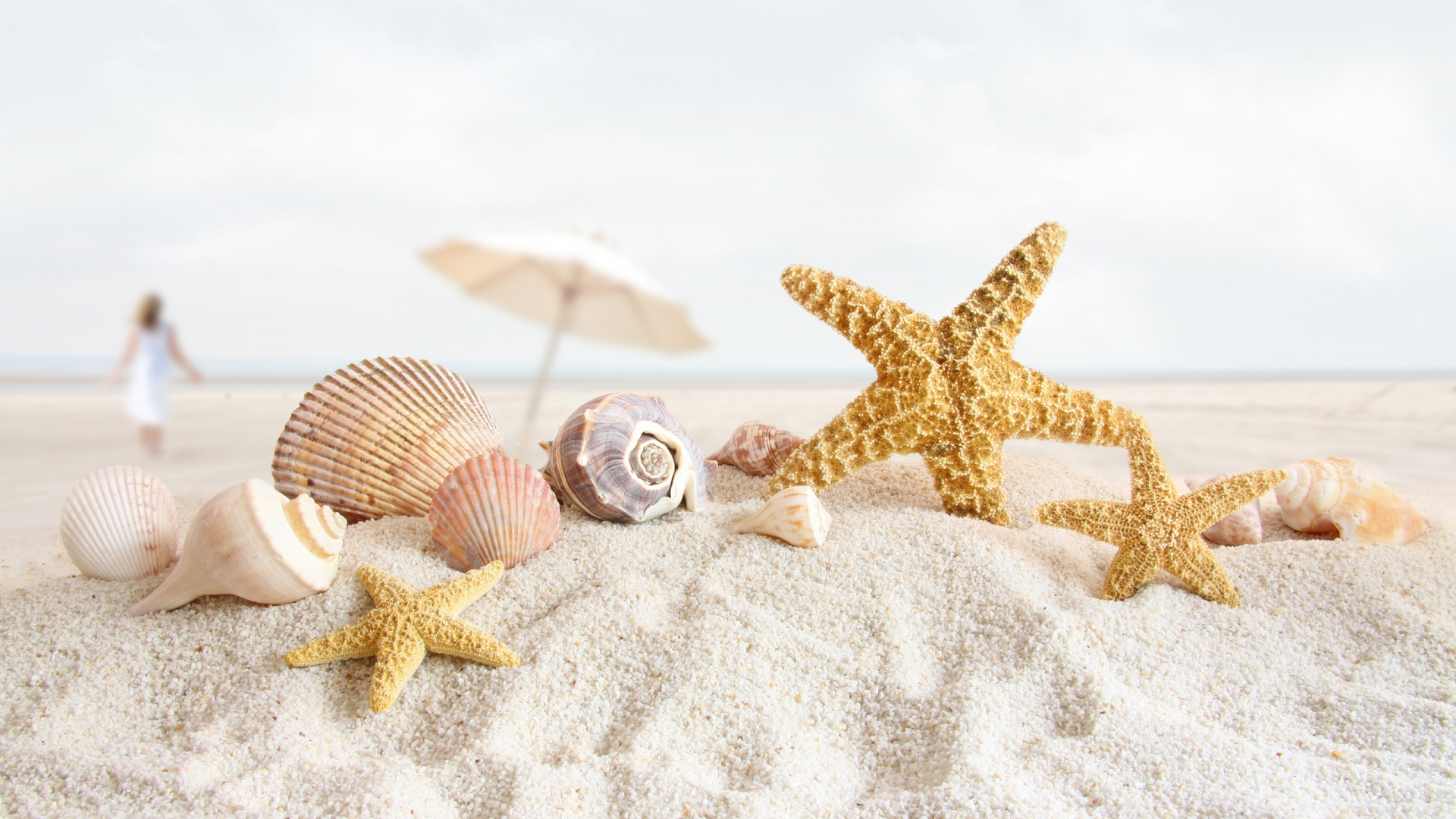 Summer Nature Pages Seashells Starfish wallpapers HD   271736 1920x1080