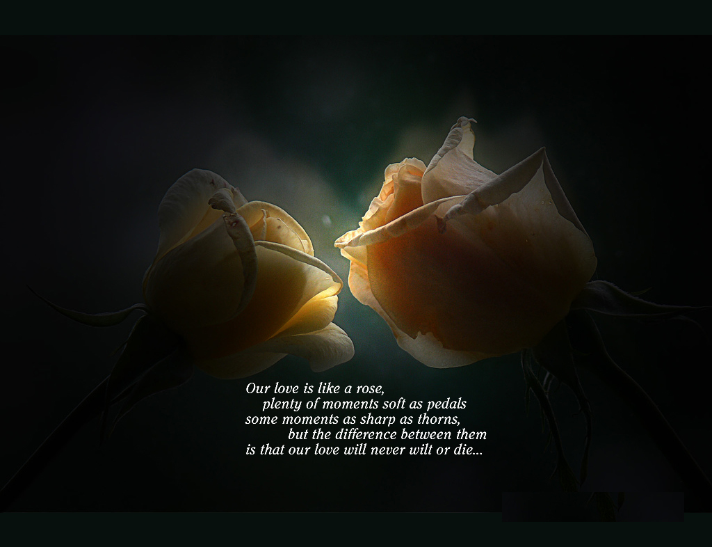 Sweet Love Quotes Wallpapers 1024x786