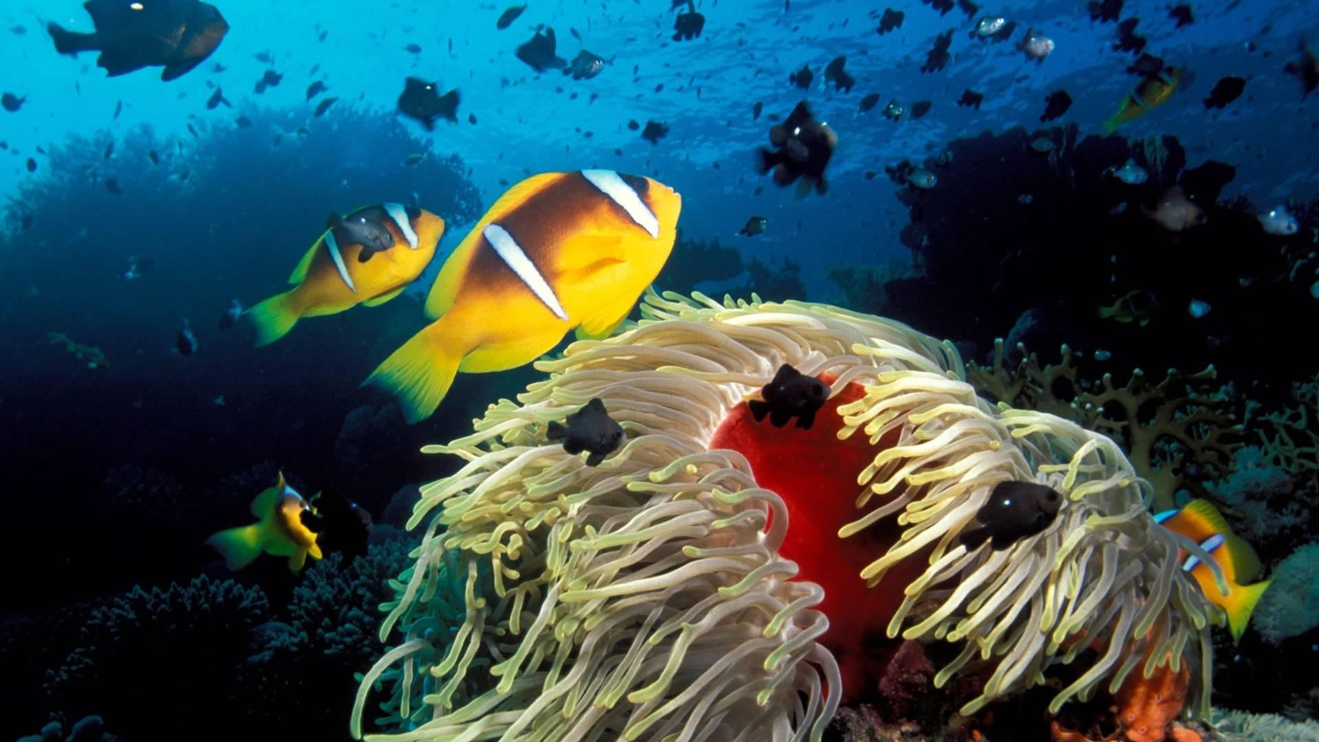 Life Coral Reef   Tropical FishUnderwater Sea Life Wallpaper 1920x1080