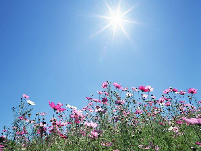 background sunny sky wallpapers for desktop background sunny sky 700x525