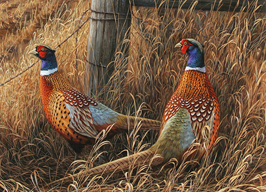 Pheasant Dogs For Sale In Ohio