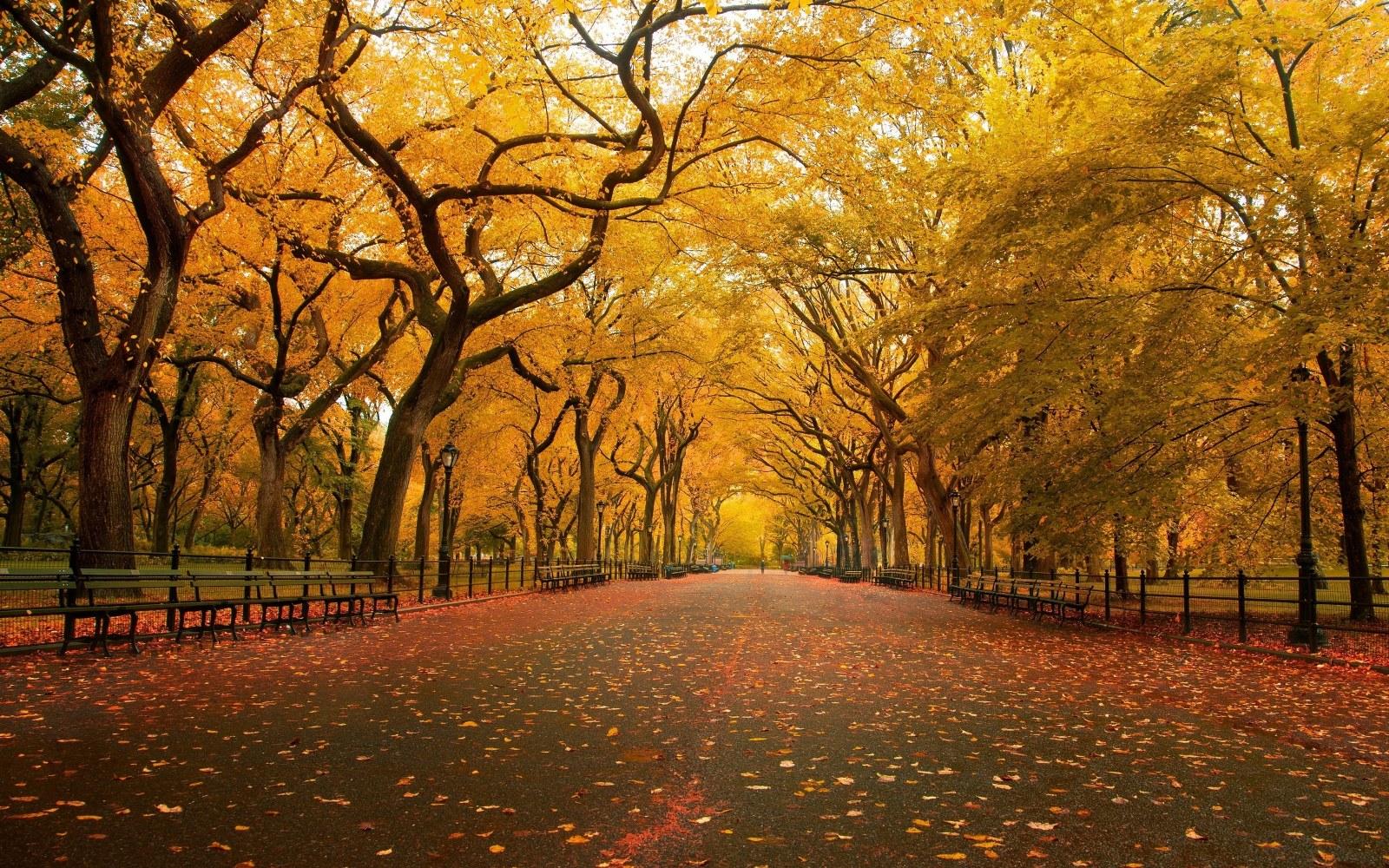 Autumn Scene Wallpaper 16001000 wallpapers55com   Best Wallpapers 1600x1000