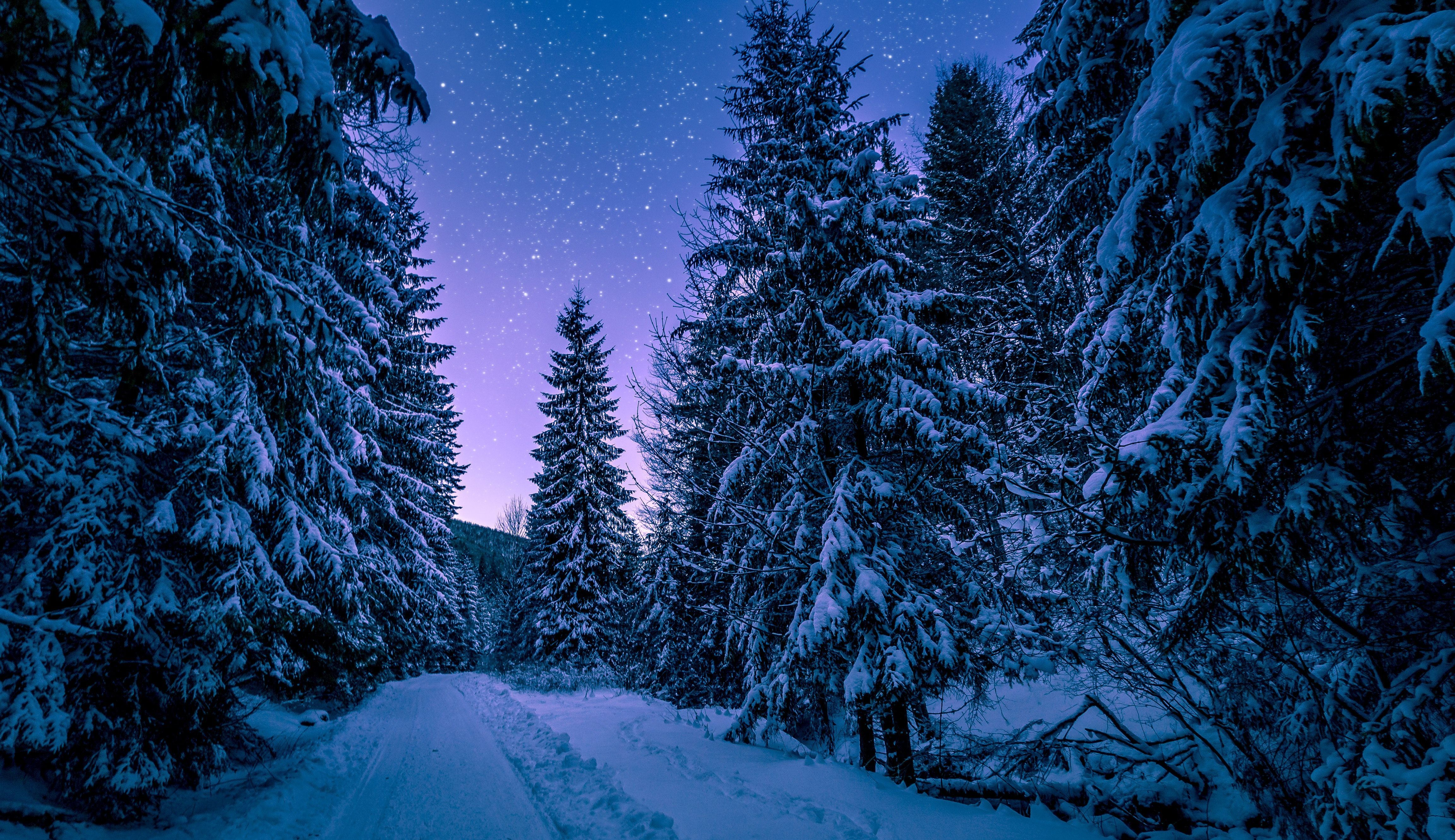 Free Download Night Forest Wallpapers Hd Download 4608x2660