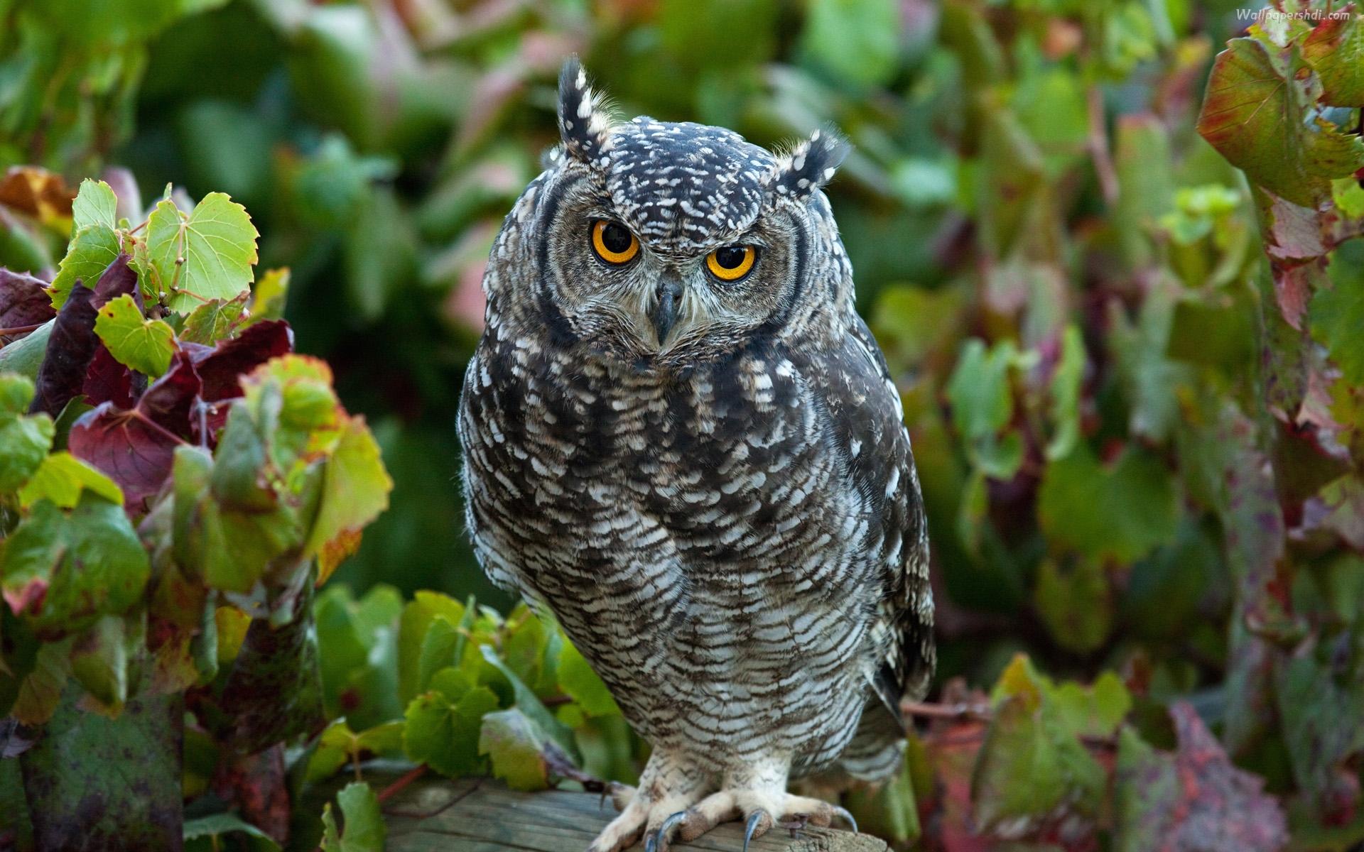 Desktop hd owl wallpapers download Download 3d HD colour design 1920x1200
